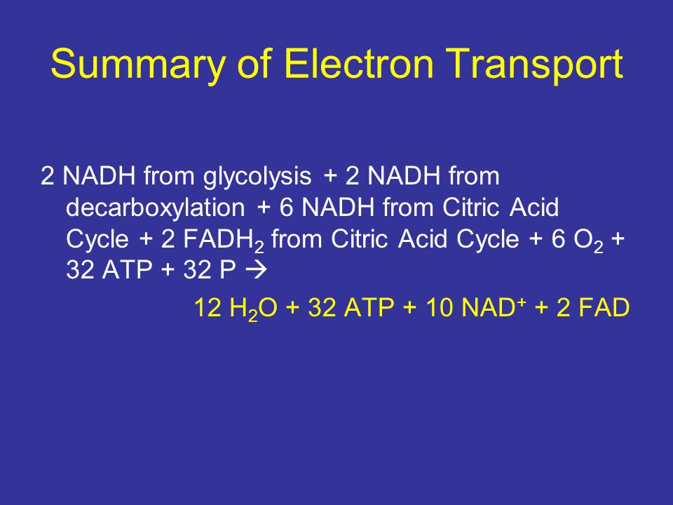 Summary of Electron Transport 2 NADH from glycolysis + 2 NADH from decarboxylation + 6 NADH from Citric Acid Cycle + 2 FADH 2 from Citric Acid Cycle +