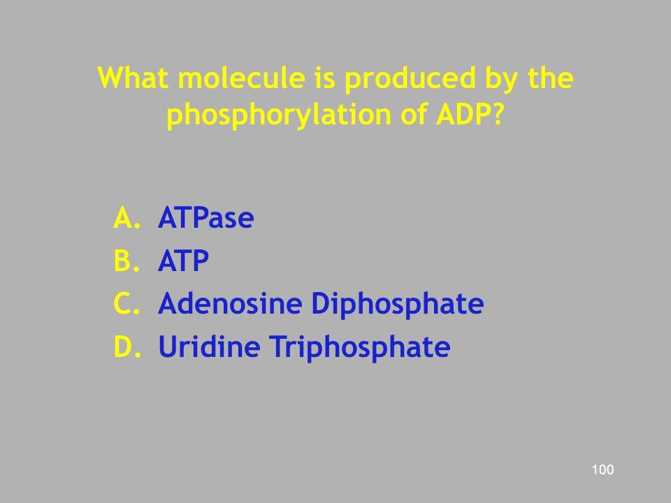 100 What molecule is produced by the phosphorylation of ADP? A.ATPase B. ATP C. Adenosine Diphosphate D. Uridine Triphosphate