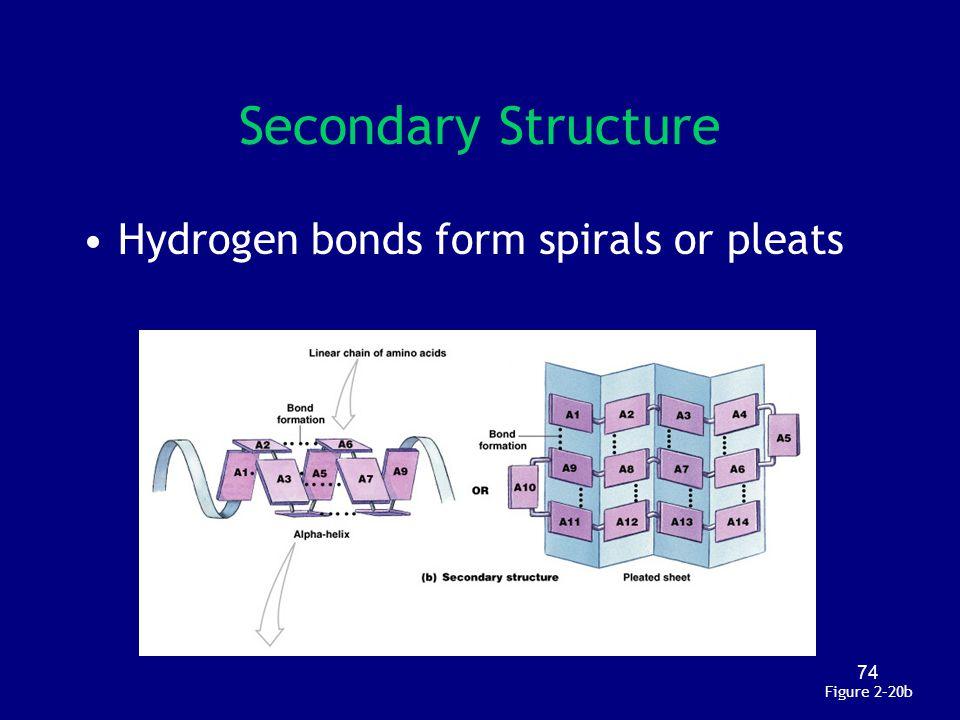 74 Secondary Structure Figure 2–20b Hydrogen bonds form spirals or pleats