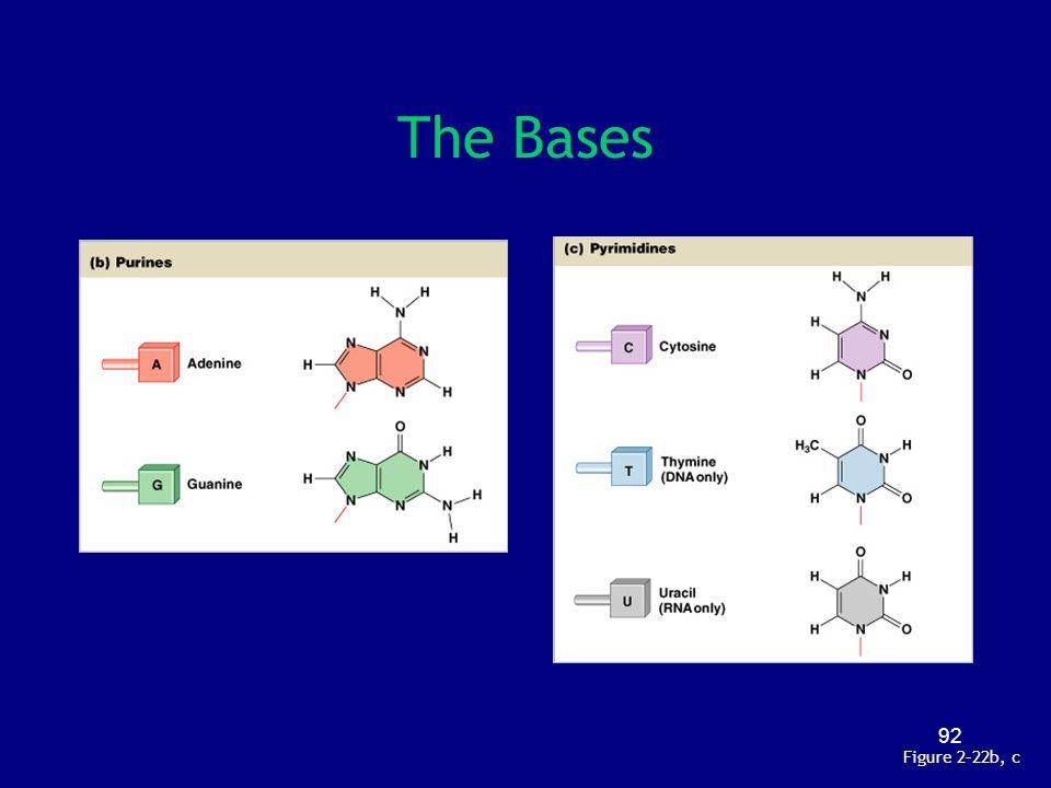 92 The Bases Figure 2–22b, c