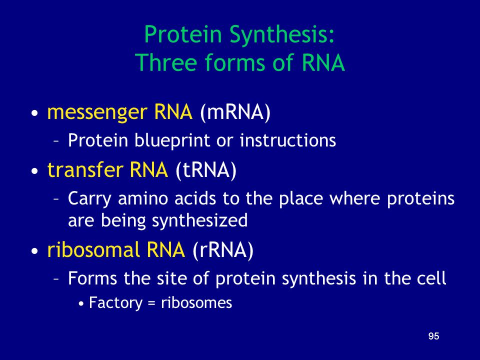 95 Protein Synthesis: Three forms of RNA messenger RNA (mRNA) –Protein blueprint or instructions transfer RNA (tRNA) –Carry amino acids to the place w