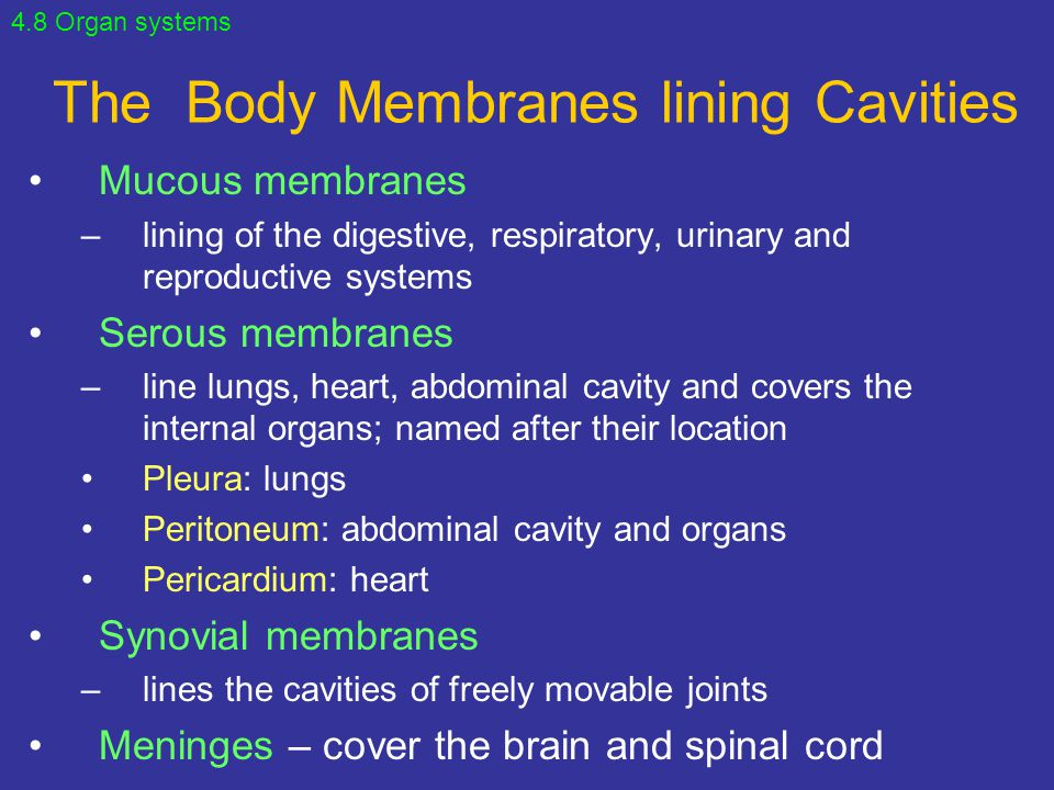 The Body Membranes lining Cavities Mucous membranes –lining of the digestive, respiratory, urinary and reproductive systems Serous membranes –line lun