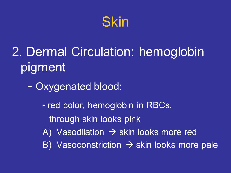 Skin 2. Dermal Circulation: hemoglobin pigment - Oxygenated blood: - red color, hemoglobin in RBCs, through skin looks pink A) Vasodilation  skin loo