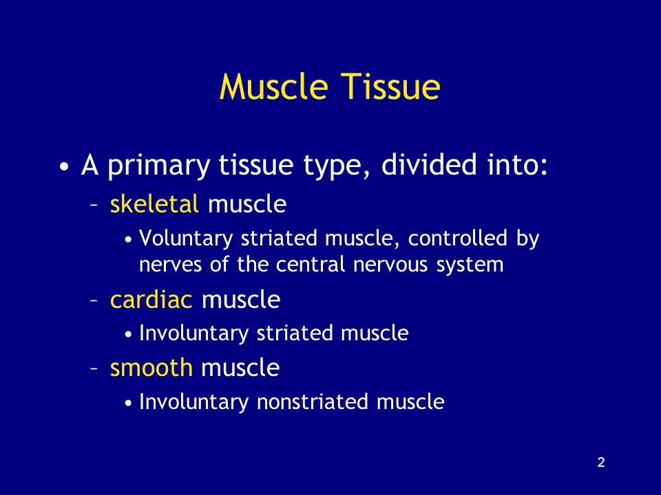 3 Characteristics of all Muscle Tissues 1.Specialized Cells: - elongated, high density of myofilaments = cytoplasmic microfilaments of actin and myosin 2.Excitability/Irritability: - receive and respond to stimulus 3.Contractility: - shorten and produce force upon stimulation 4.Extensibility: - can be stretched 5.Elasticity: - recoil after stretch