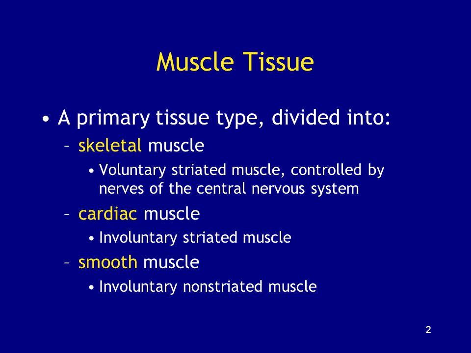 133 Cardiac Muscle Tissue