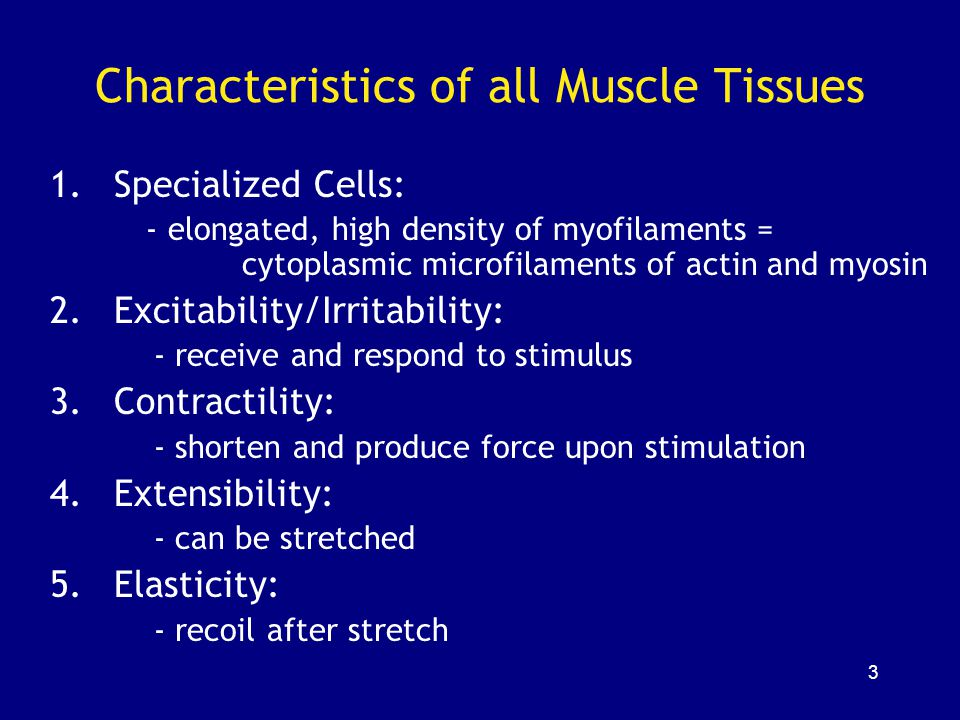 14 Skeletal Muscle Fibers Huge cells: –up to 100 µm diameter, 30 cm long Multinucleate Formed by fusion of 100s of myoblasts Nuclei of each myoblast retained to provide enough mRNA for protein synthesis in large fiber Unfused myoblasts in adult = satellite cells Satellite cells are capable of division and fusion to existing fibers for repair but cannot generate new fibers