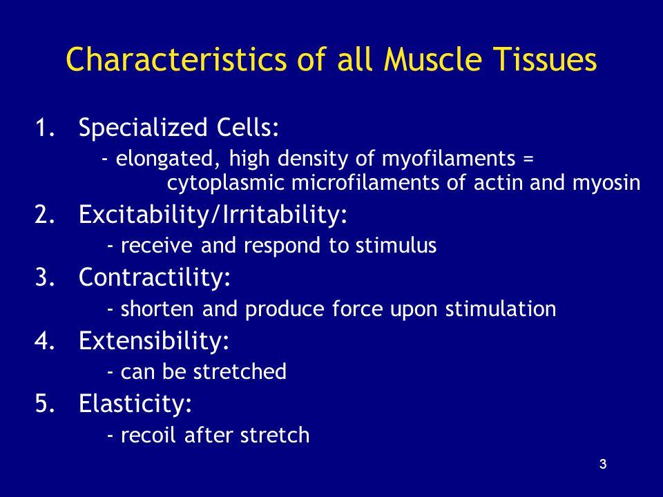 24 Each muscle = ~ 100 fascicles Each fascicle = ~ 100 muscle fibers Each fiber (cell) = ~ 1 thousand myofibrils Each myofibril = ~ 10 thousand sarcomeres