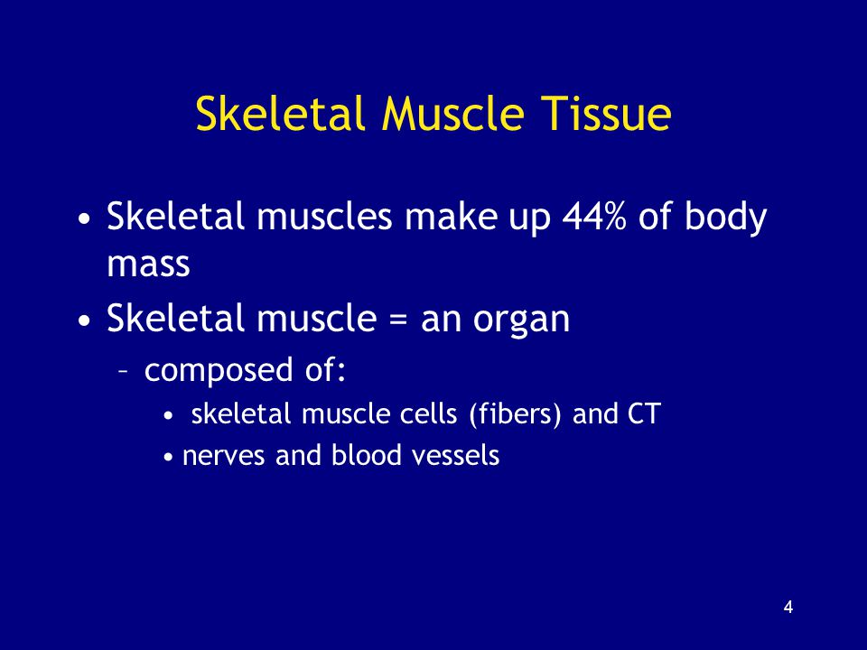 145 Characteristics of Skeletal, Cardiac, and Smooth Muscle Table 10–4