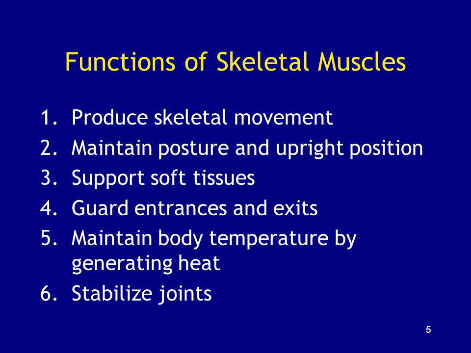 126 Muscles and Fiber Types White muscle: –mostly fast fibers –pale (e.g., chicken breast) Red muscle: –mostly slow fibers –dark (e.g., chicken legs) Most human muscles: –mixed fibers –pink