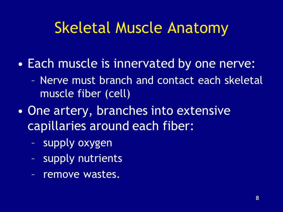 149 SUMMARY 3 types of muscle tissue: –skeletal –cardiac –smooth Functions of skeletal muscles Structure of skeletal muscle cells: –endomysium –perimysium –epimysium Functional anatomy of skeletal muscle fiber: –actin and myosin