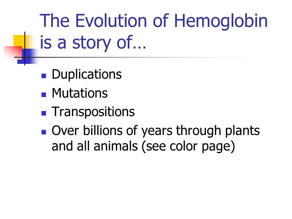 The Evolution of Hemoglobin is a story of… Duplications Mutations Transpositions Over billions of years through plants and all animals (see color page