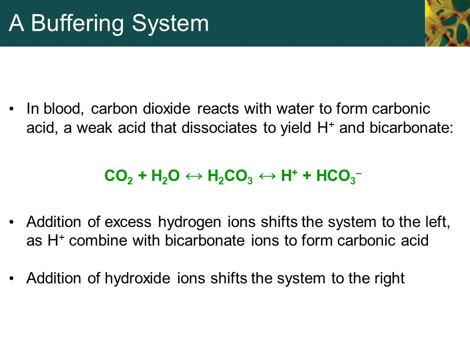 A Buffering System In blood, carbon dioxide reacts with water to form carbonic acid, a weak acid that dissociates to yield H + and bicarbonate: CO 2 +