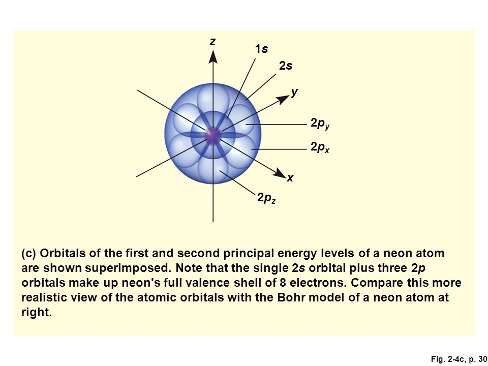 Fig. 2-4c, p. 30 (c) Orbitals of the first and second principal energy levels of a neon atom are shown superimposed. Note that the single 2s orbital p
