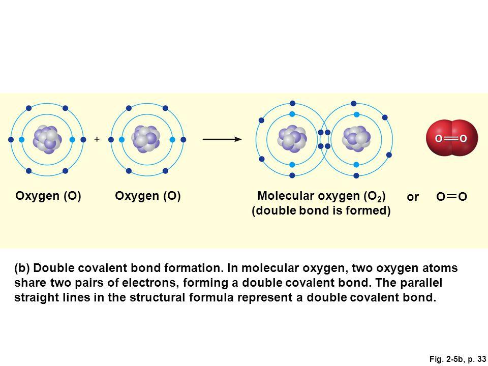 Fig. 2-5b, p. 33 Oxygen (O) Molecular oxygen (O 2 ) (double bond is formed) orOO (b) Double covalent bond formation. In molecular oxygen, two oxygen a