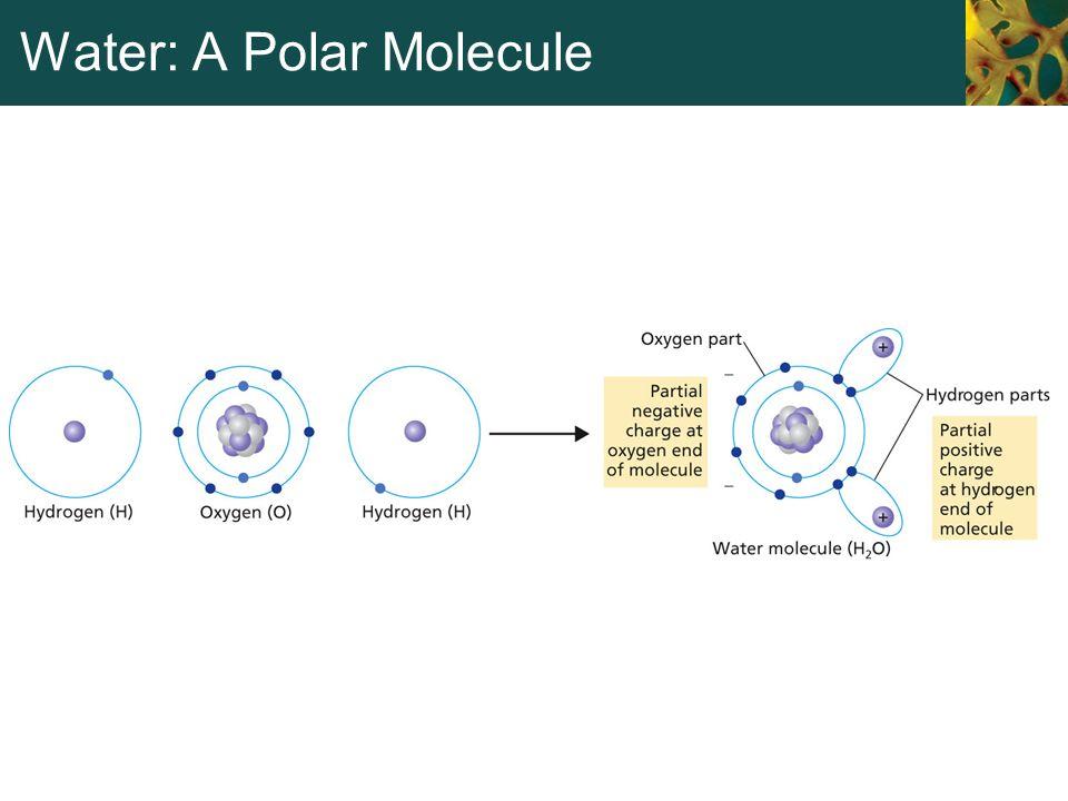 Water: A Polar Molecule