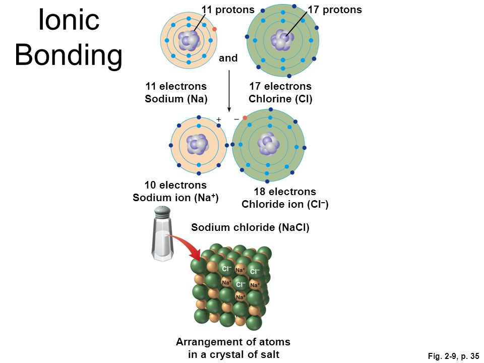 Fig. 2-9, p. 35 11 protons17 protons and 11 electrons Sodium (Na) 17 electrons Chlorine (Cl) 10 electrons Sodium ion (Na + ) 18 electrons Chloride ion