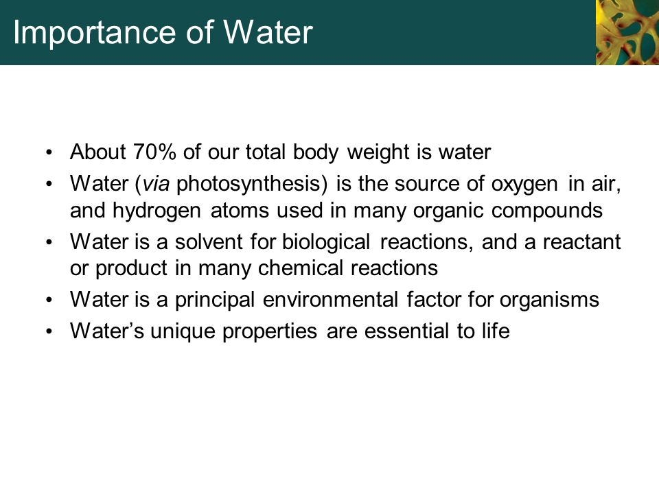 Importance of Water About 70% of our total body weight is water Water (via photosynthesis) is the source of oxygen in air, and hydrogen atoms used in