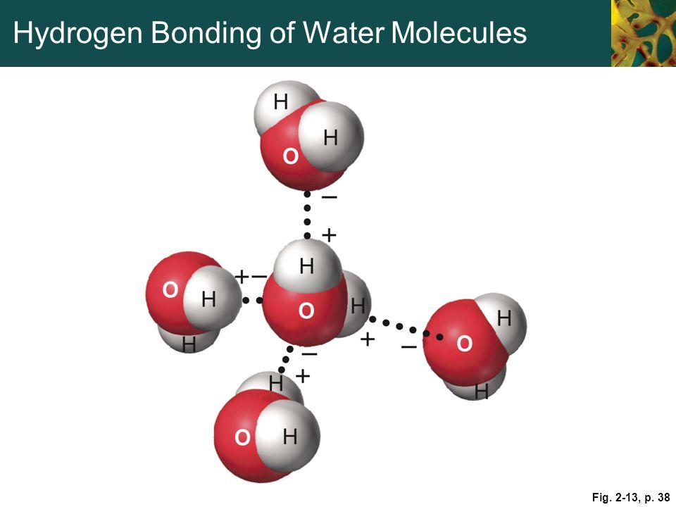 Hydrogen Bonding of Water Molecules Fig. 2-13, p. 38