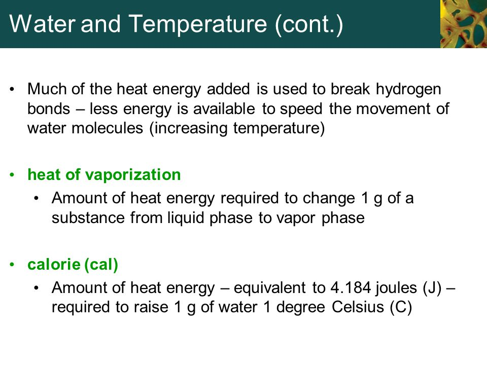 Water and Temperature (cont.) Much of the heat energy added is used to break hydrogen bonds – less energy is available to speed the movement of water