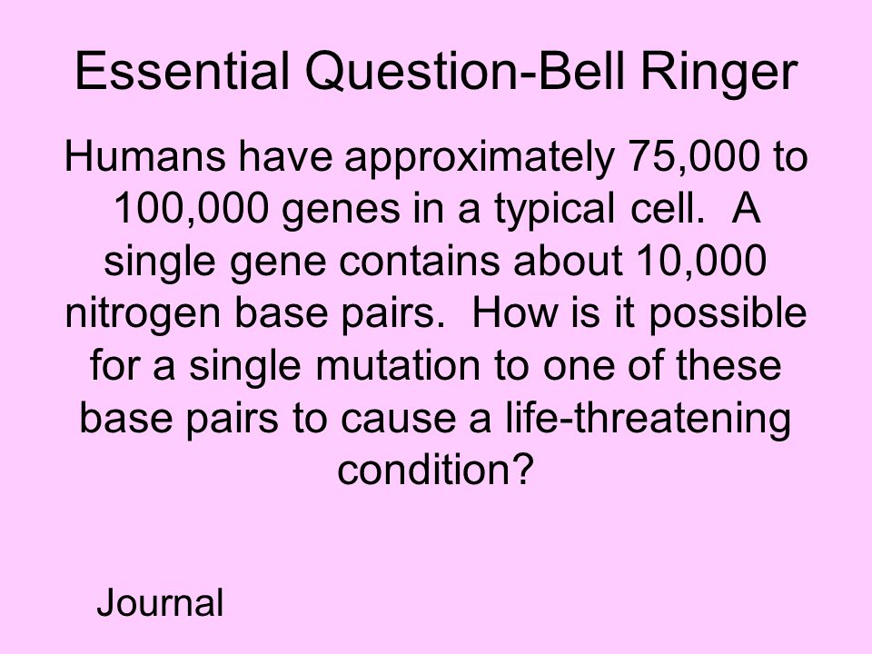 Essential Question-Bell Ringer Humans have approximately 75,000 to 100,000 genes in a typical cell. A single gene contains about 10,000 nitrogen base