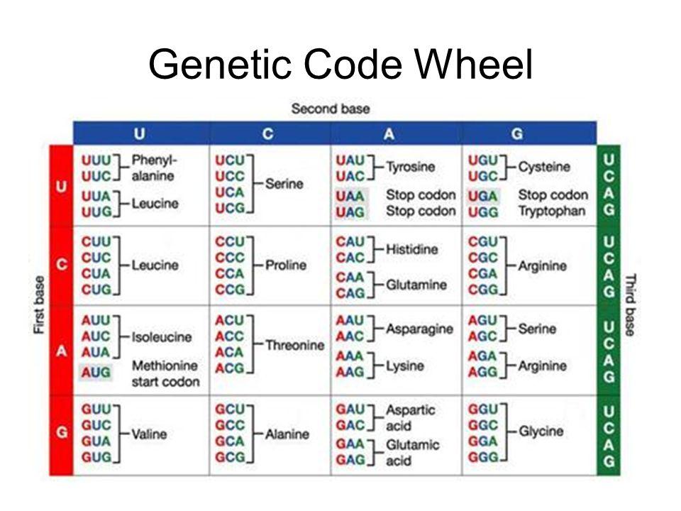 Genetic Code Wheel