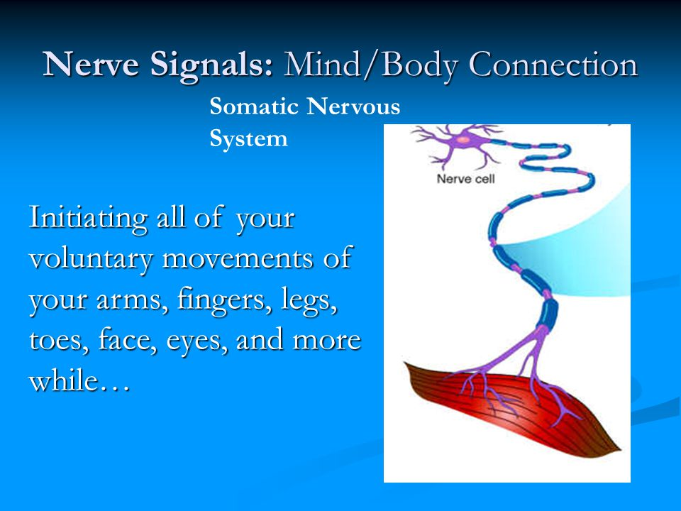 Nerve Signals: Mind/Body Connection Initiating all of your voluntary movements of your arms, fingers, legs, toes, face, eyes, and more while… Somatic
