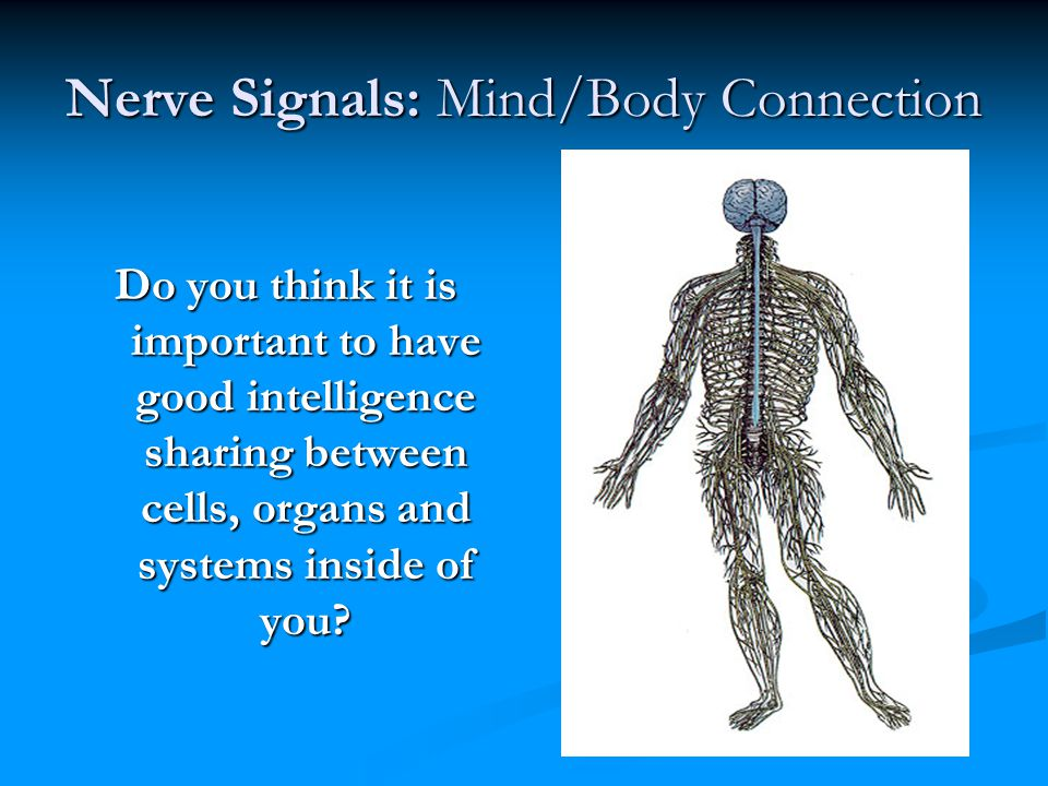 Nerve Signals: Mind/Body Connection Do you think it is important to have good intelligence sharing between cells, organs and systems inside of you