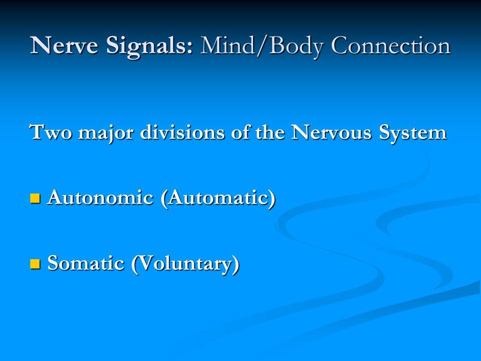 Nerve Signals: Mind/Body Connection Two major divisions of the Nervous System Autonomic (Automatic) Autonomic (Automatic) Somatic (Voluntary) Somatic