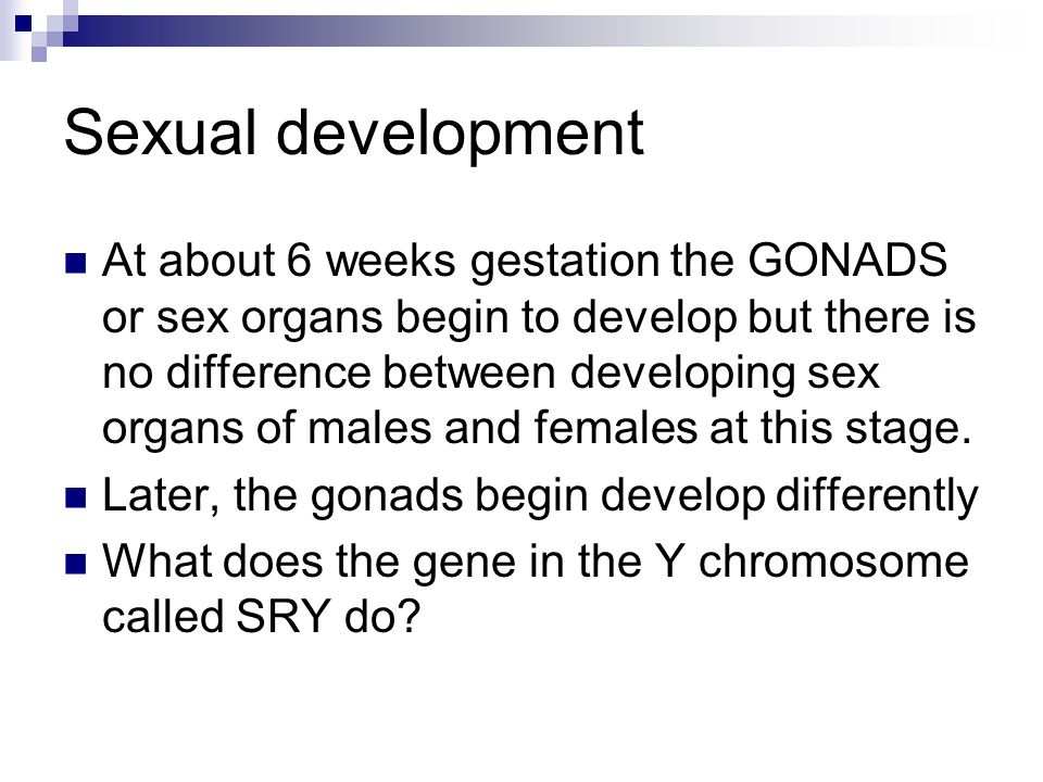 Sexual development At about 6 weeks gestation the GONADS or sex organs begin to develop but there is no difference between developing sex organs of males and females at this stage.