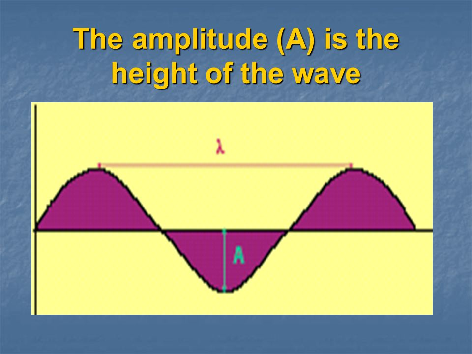 The amplitude (A) is the height of the wave