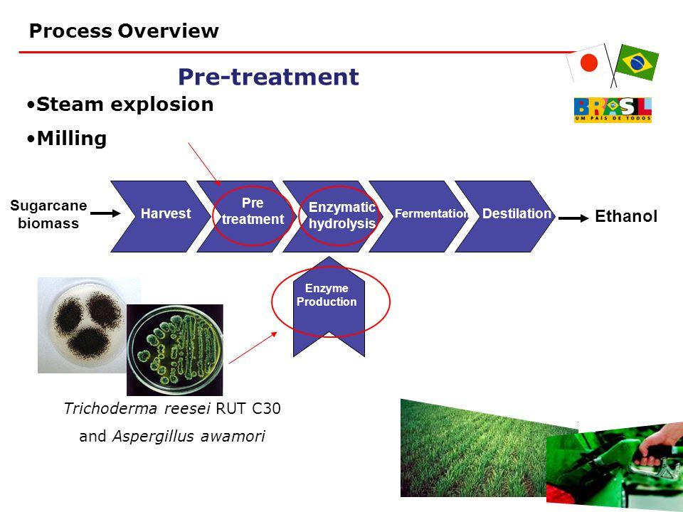 Pre-treatment Harvest Pre treatment Enzymatic hydrolysis Fermentation Destilation Sugarcane biomass Ethanol Enzyme Production Steam explosion Milling Trichoderma reesei RUT C30 and Aspergillus awamori Process Overview