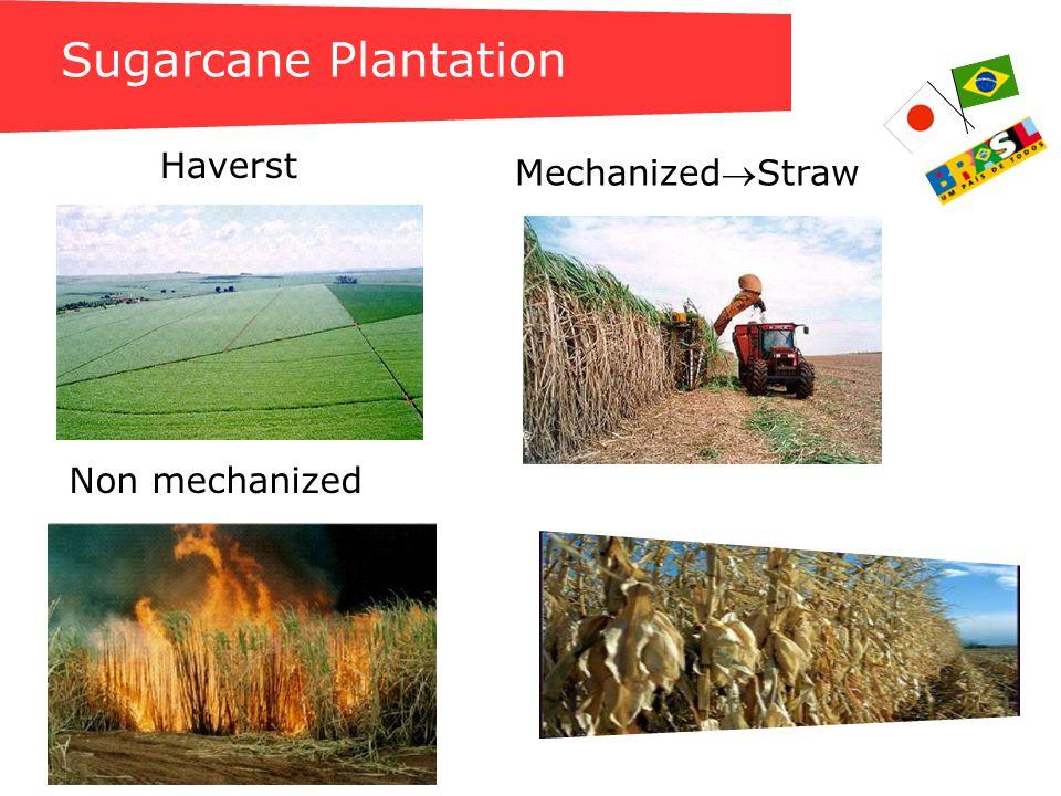 Sugarcane Bagasse Treated Sugarcane Bagasse BIOMASS