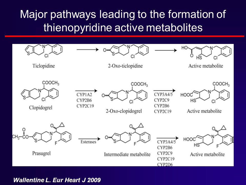 Major pathways leading to the formation of thienopyridine active metabolites Wallentine L. Eur Heart J 2009