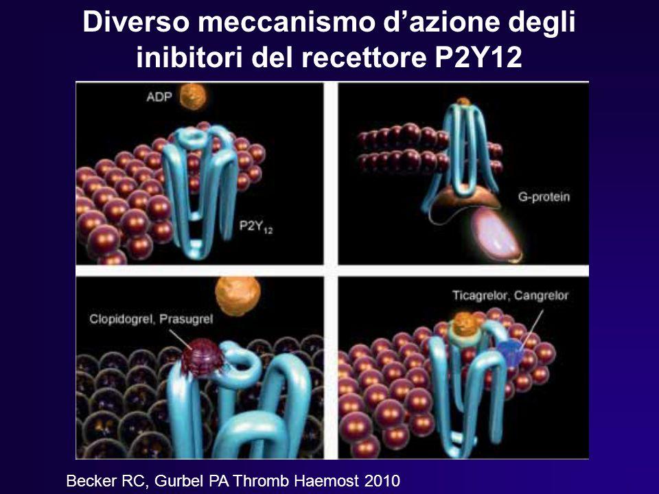Diverso meccanismo d'azione degli inibitori del recettore P2Y12 Becker RC, Gurbel PA Thromb Haemost 2010