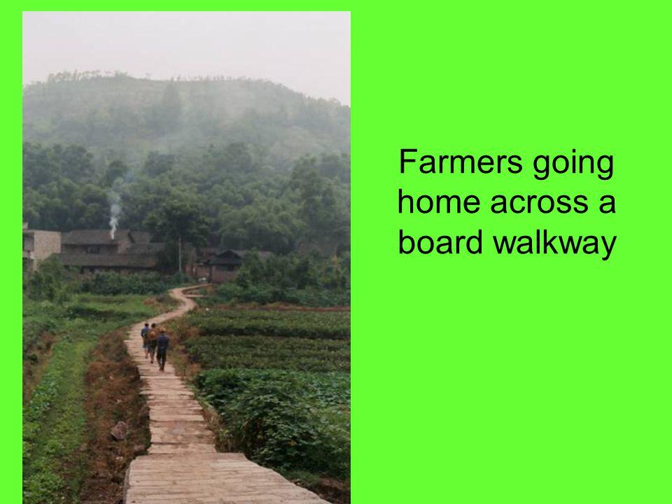 Farmers going home across a board walkway
