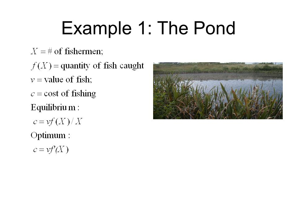 Example 1: The Pond