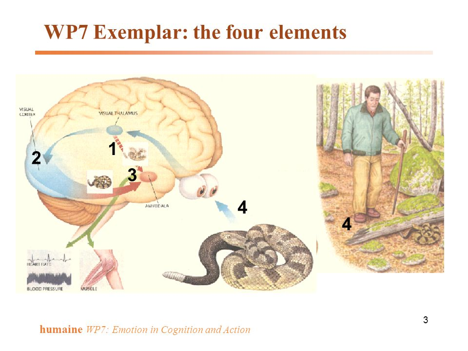 34 humaine WP7: Emotion in Cognition and Action Interact and development Tasks Cross-disciplin.