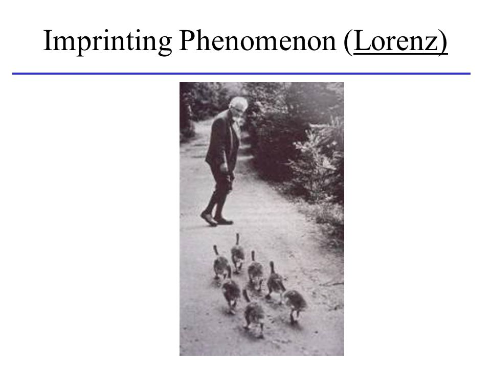 Imprinting Phenomenon (Lorenz)