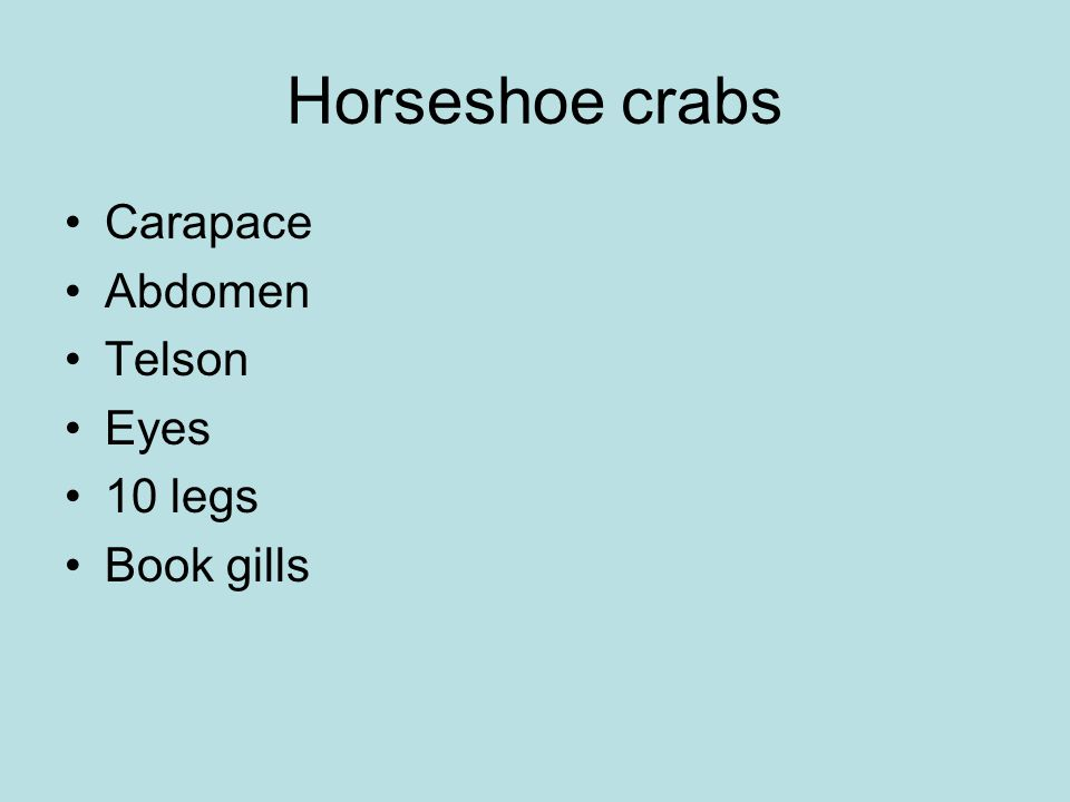 Horseshoe crabs Carapace Abdomen Telson Eyes 10 legs Book gills