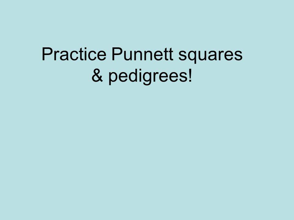 Practice Punnett squares & pedigrees!