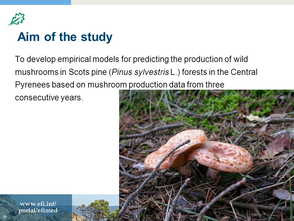 Aim of the study To develop empirical models for predicting the production of wild mushrooms in Scots pine (Pinus sylvestris L.) forests in the Central Pyrenees based on mushroom production data from three consecutive years.
