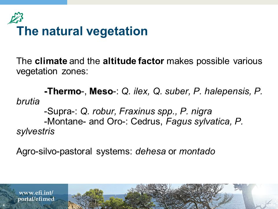 20.8.20044 The natural vegetation The climate and the altitude factor makes possible various vegetation zones: -ThermoMeso -Thermo-, Meso-: Q.