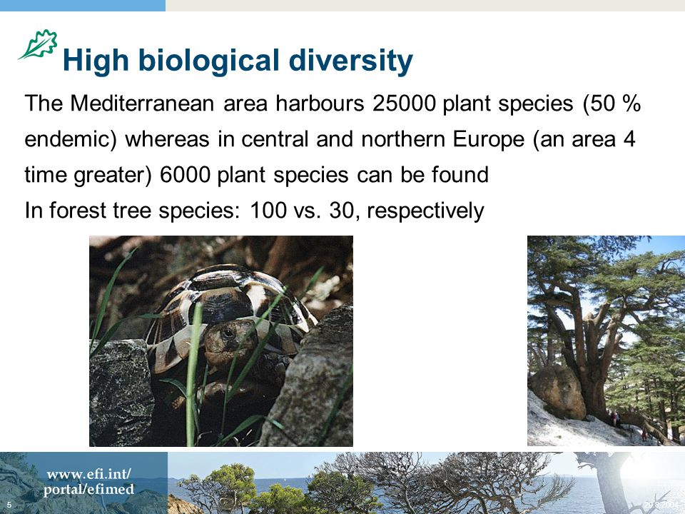 High biological diversity The Mediterranean area harbours plant species (50 % endemic) whereas in central and northern Europe (an area 4 time greater) 6000 plant species can be found In forest tree species: 100 vs.