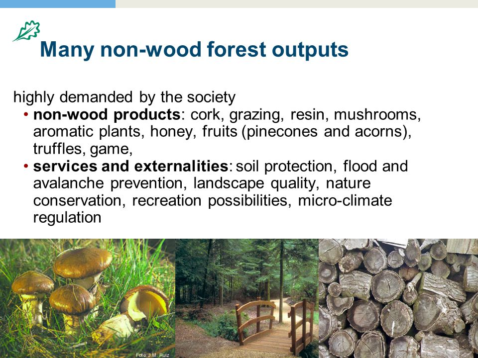 20.8.20046 Many non-wood forest outputs highly demanded by the society non-wood products: cork, grazing, resin, mushrooms, aromatic plants, honey, fruits (pinecones and acorns), truffles, game, services and externalities: soil protection, flood and avalanche prevention, landscape quality, nature conservation, recreation possibilities, micro-climate regulation