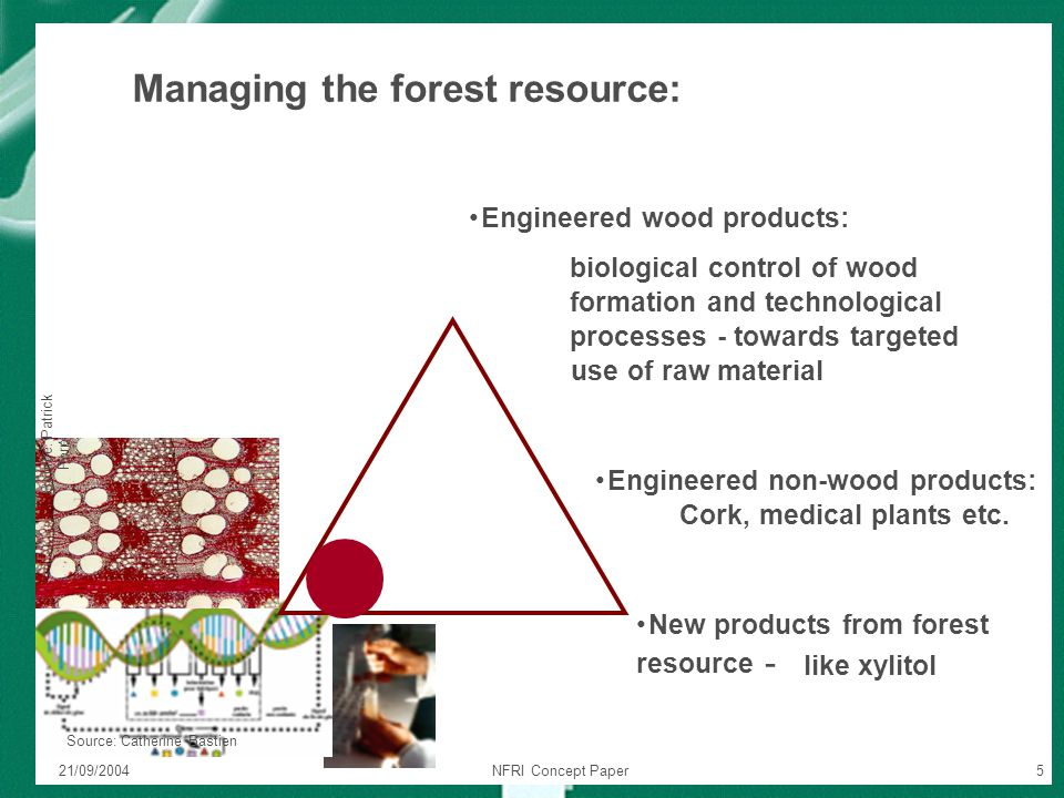 21/09/2004NFRI Concept Paper5 Source: Patrick Perr é Source: Catherine Bastien Engineered wood products: biological control of wood formation and tech