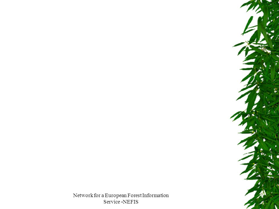 Network for a European Forest Information Service -NEFIS