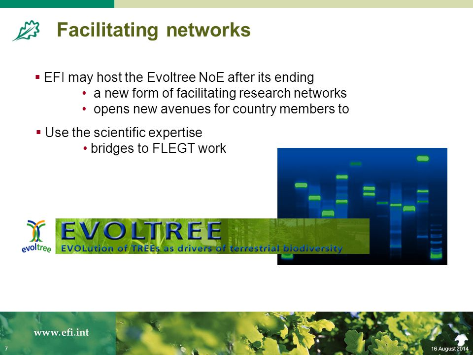 16 August 20147 Facilitating networks  EFI may host the Evoltree NoE after its ending a new form of facilitating research networks opens new avenues for country members to  Use the scientific expertise bridges to FLEGT work