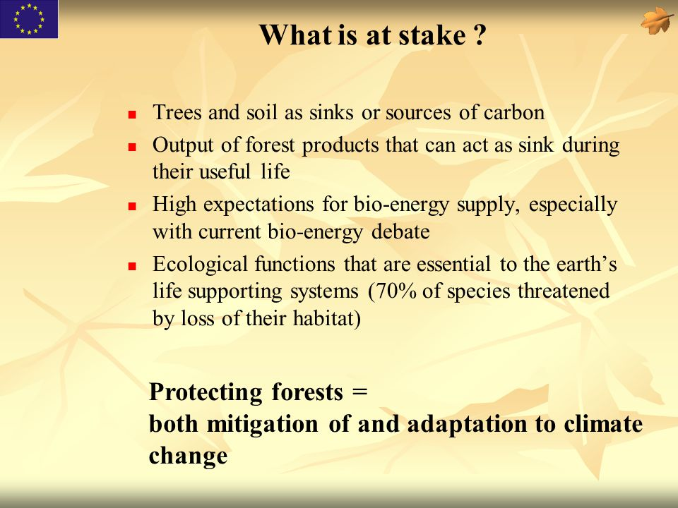 What is at stake ? Trees and soil as sinks or sources of carbon Output of forest products that can act as sink during their useful life High expectati