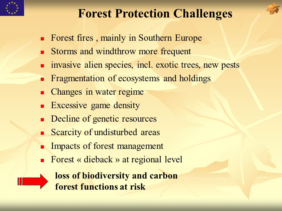 Forest fires, mainly in Southern Europe Storms and windthrow more frequent invasive alien species, incl. exotic trees, new pests Fragmentation of ecos