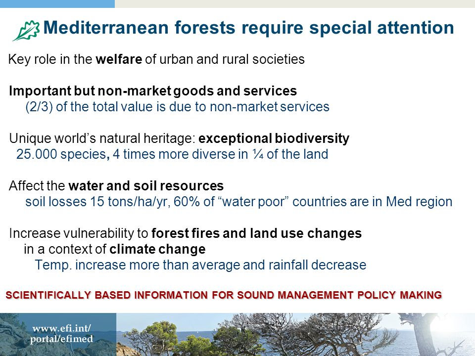 Mediterranean forests require special attention Key role in the welfare of urban and rural societies Important but non-market goods and services (2/3) of the total value is due to non-market services Unique world's natural heritage: exceptional biodiversity 25.000 species, 4 times more diverse in ¼ of the land Affect the water and soil resources soil losses 15 tons/ha/yr, 60% of water poor countries are in Med region Increase vulnerability to forest fires and land use changes in a context of climate change Temp.